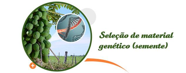 Seleção de Material Genético (semente)